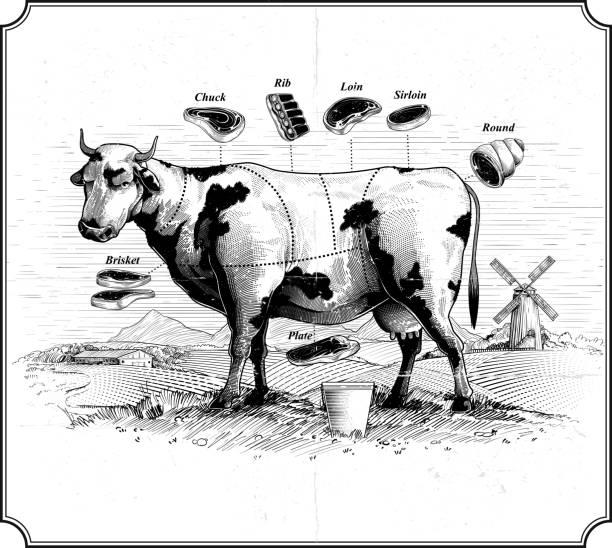 bildbanksillustrationer, clip art samt tecknat material och ikoner med ko. styckningsdelar av nötkött - loin