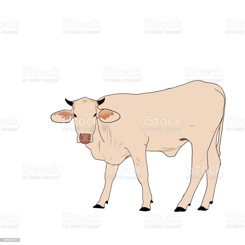 Cow Brown Color Isolate On White Background Stock Vector Art & More ...