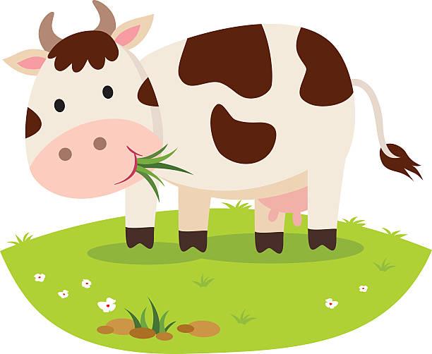 kuh essen gras. rind grasen. - lustige kuh bilder stock-grafiken, -clipart, -cartoons und -symbole