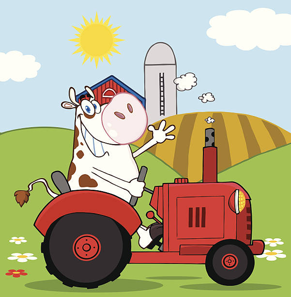 cow farmer in roten traktor winkt eine begrüßung mit hintergrund - lustige kuh bilder stock-grafiken, -clipart, -cartoons und -symbole