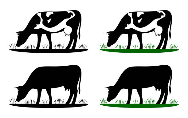 cow grazing on meadow, cow silhouette in field eating grass. - cow stock illustrations, clip art, cartoons, & icons