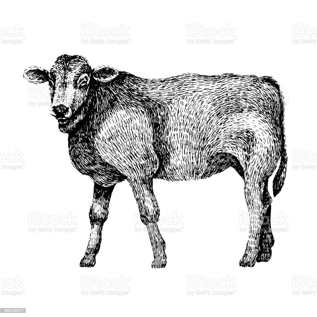 牛手には黒と白の美しい動物のイラストが描かれましたライン アートは