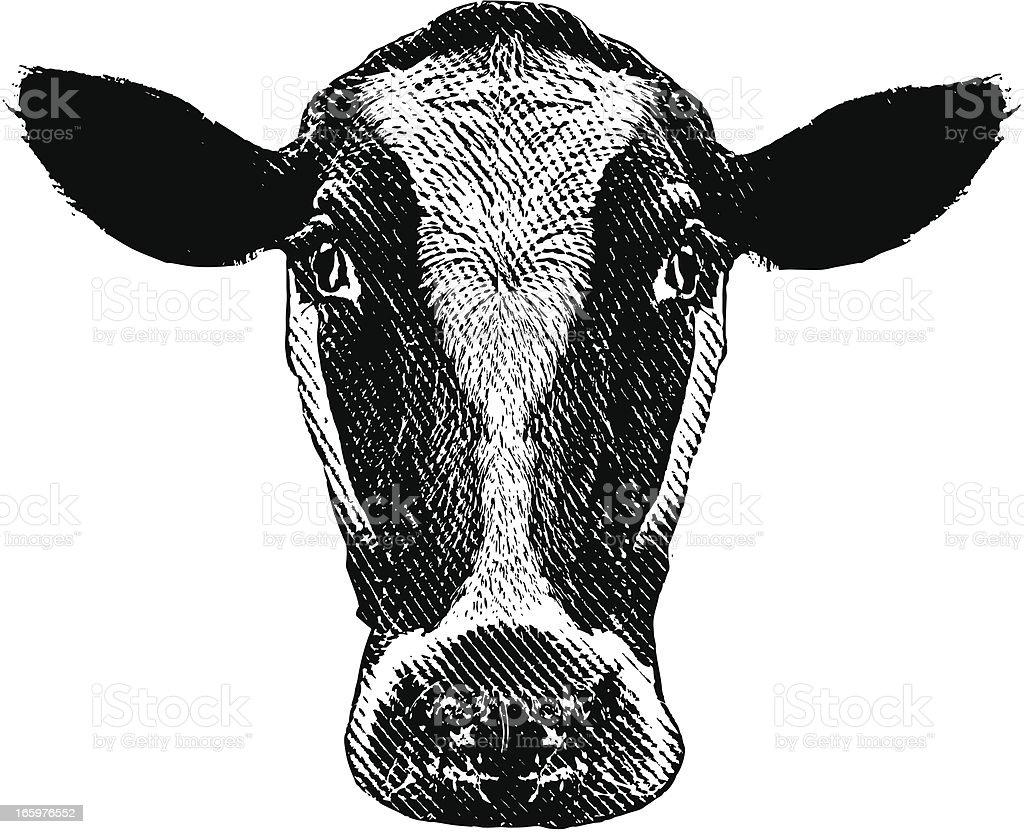 Cow Head royalty-free stock vector art