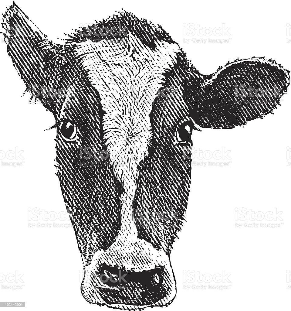 Uncategorized Cow Head Drawing cow head stock vector art 492442901 istock royalty free art