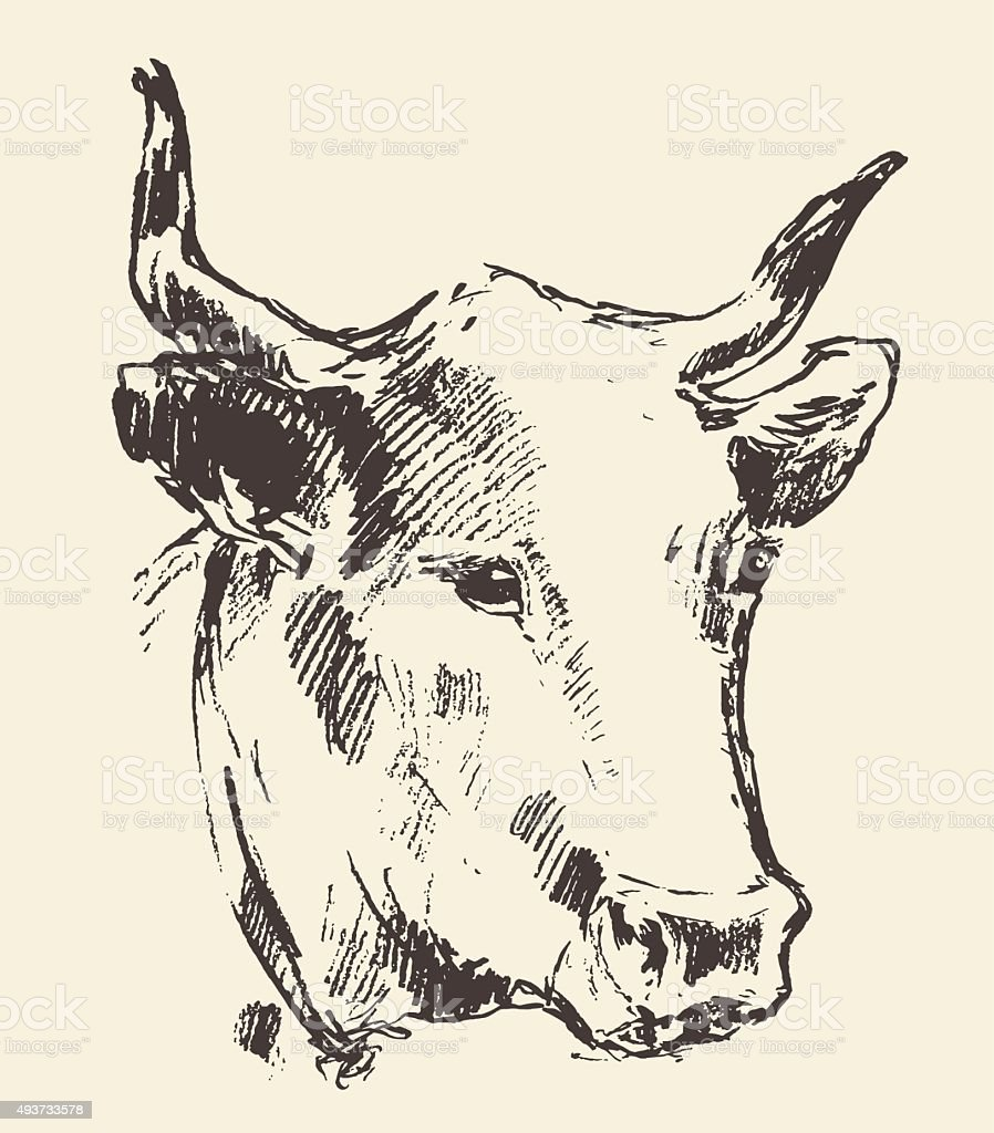 Cow Head With Bell Dutch Cattle Breed Drawn Sketch Stock Vector Art ...