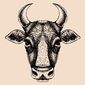 Cow portrait. Hand drawn vector illustration. Logo for your farm or other design.