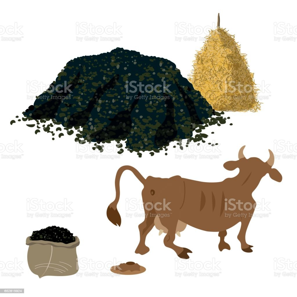 Cow shits vector art illustration