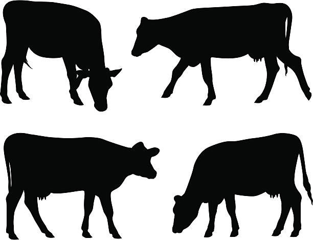 Cow silhouettes Cow silhouettes. domestic cattle stock illustrations