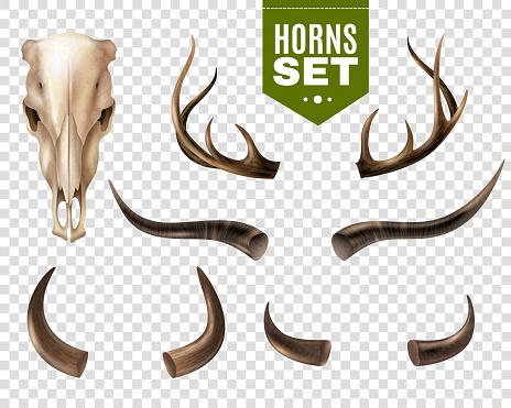 cow skull set