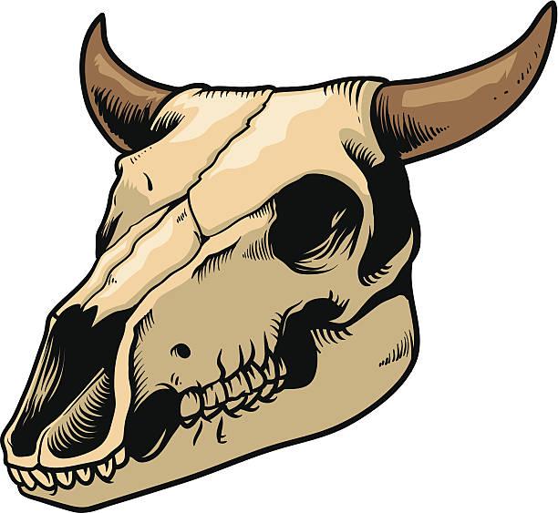 cow skull - animal skull stock illustrations