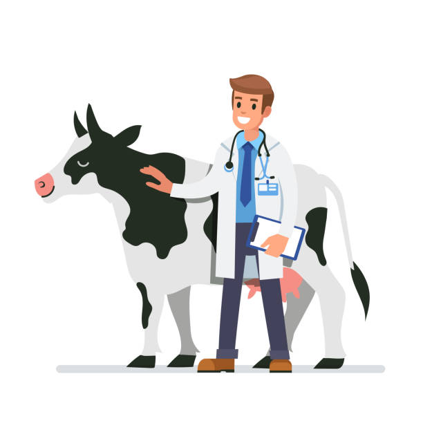cow veterinarian - veterinarian stock illustrations, clip art, cartoons, & icons
