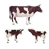 Cow with calves. Vector illustration isolated on white background