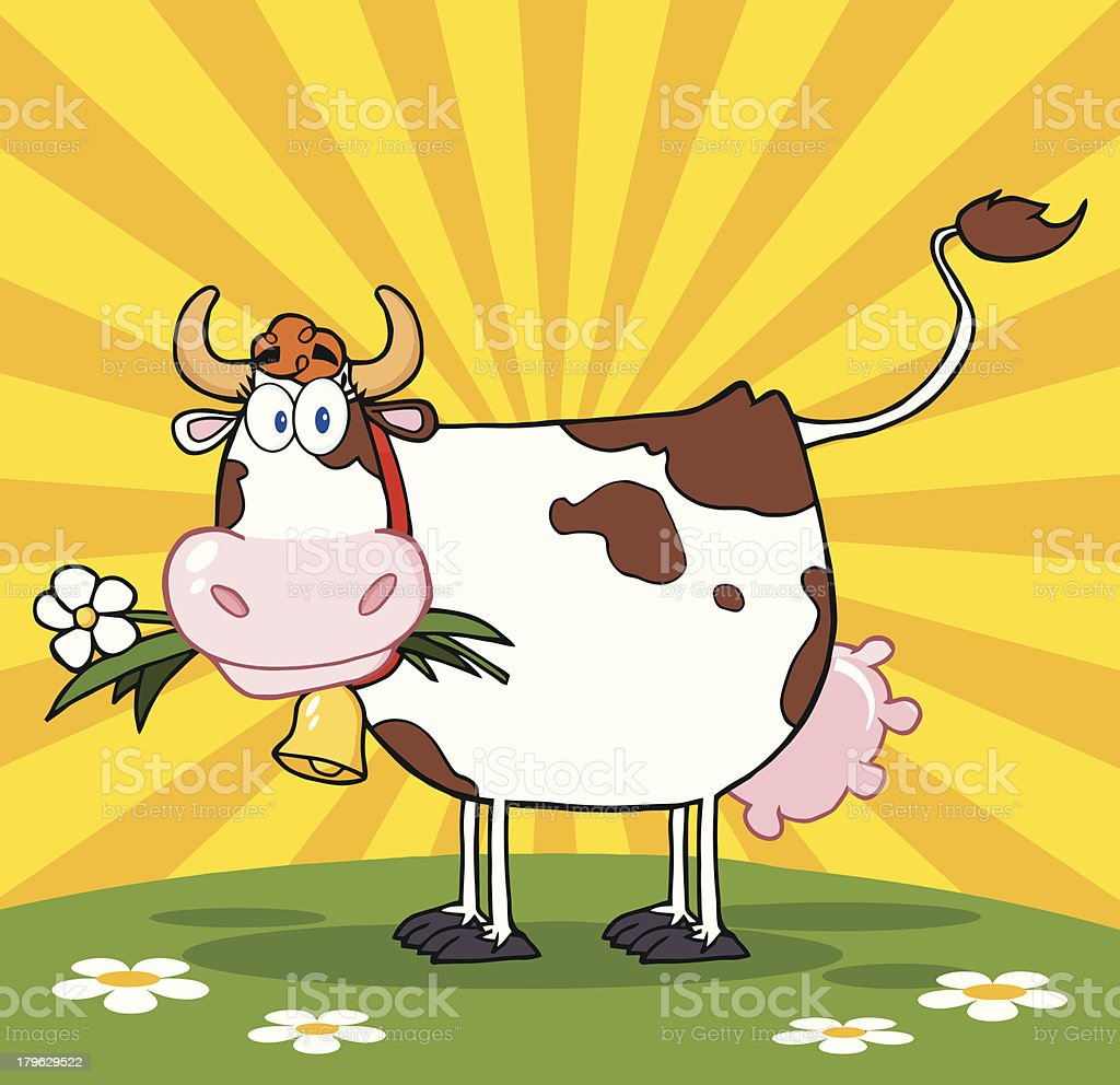 Cow With Flower In Mouth On A Meadow And Sunburst royalty-free stock vector art