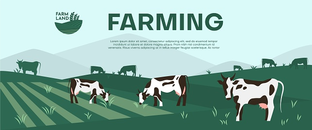 Cows farming on green meadow agricultural business concept.