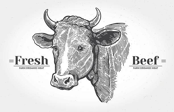kühe kopf in grafischen look. - rindfleisch stock-grafiken, -clipart, -cartoons und -symbole