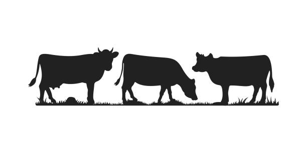 Cows in different poses vector set. Silhouettes of grass. Cow grazing on meadow. Cows in different poses vector set. Silhouettes of grass. Cow grazing on meadow cow stock illustrations