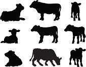 Cows in silhouette lying on the ground, stood and grazing.