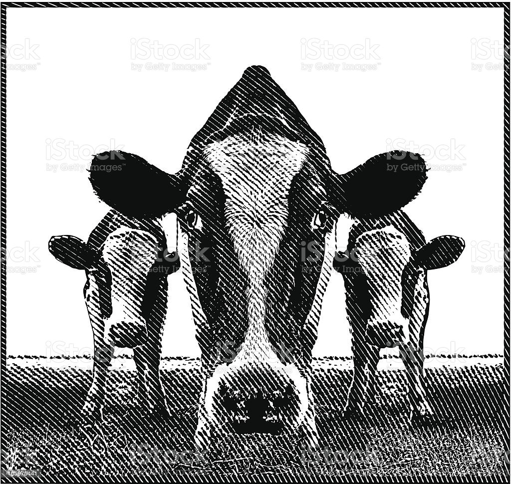 Cows vector art illustration
