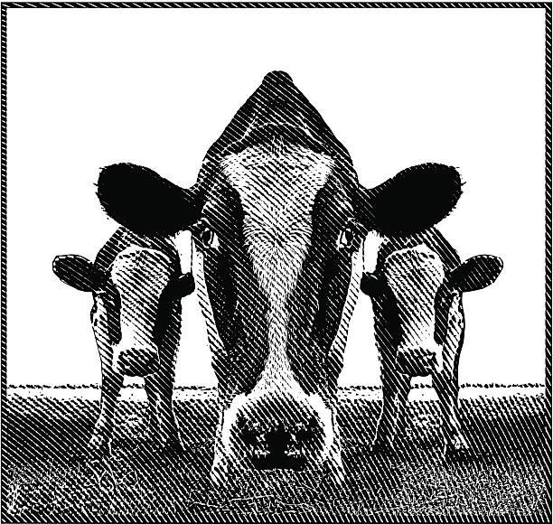 ilustrações de stock, clip art, desenhos animados e ícones de vacas - meat texture