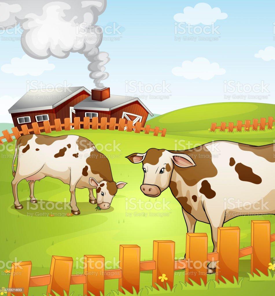 Cows royalty-free stock vector art