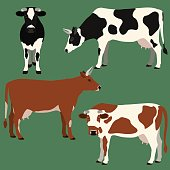 Cows vector illustration.