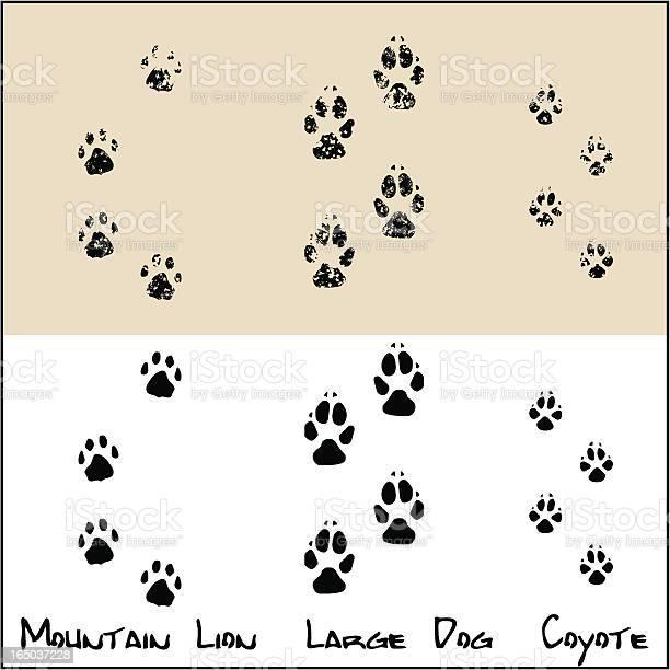 Coyote large dog mountain lion vector id165037228?b=1&k=6&m=165037228&s=612x612&h=i5xrhanqck9m0pjcn0zvlu tbdonc0zyu6n68m4nw1q=