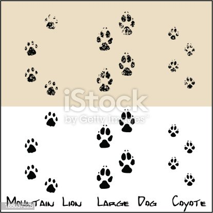 Coyote Large Dog Mountain Lion Stock Vector Art Amp More