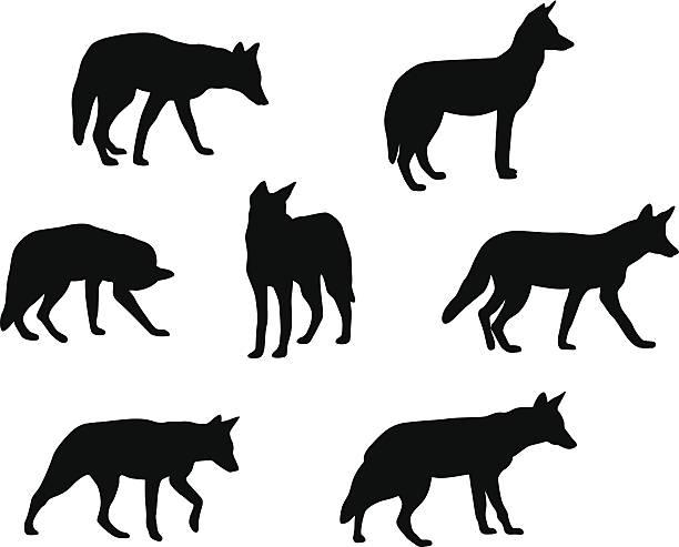 Coyotes – Vektorgrafik