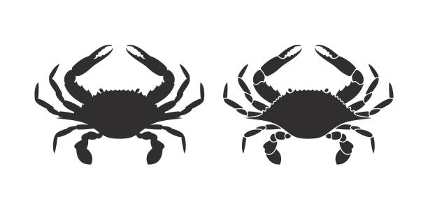 stockillustraties, clipart, cartoons en iconen met krab de silhouet. geïsoleerde krab op witte achtergrond - blauwe zwemkrab
