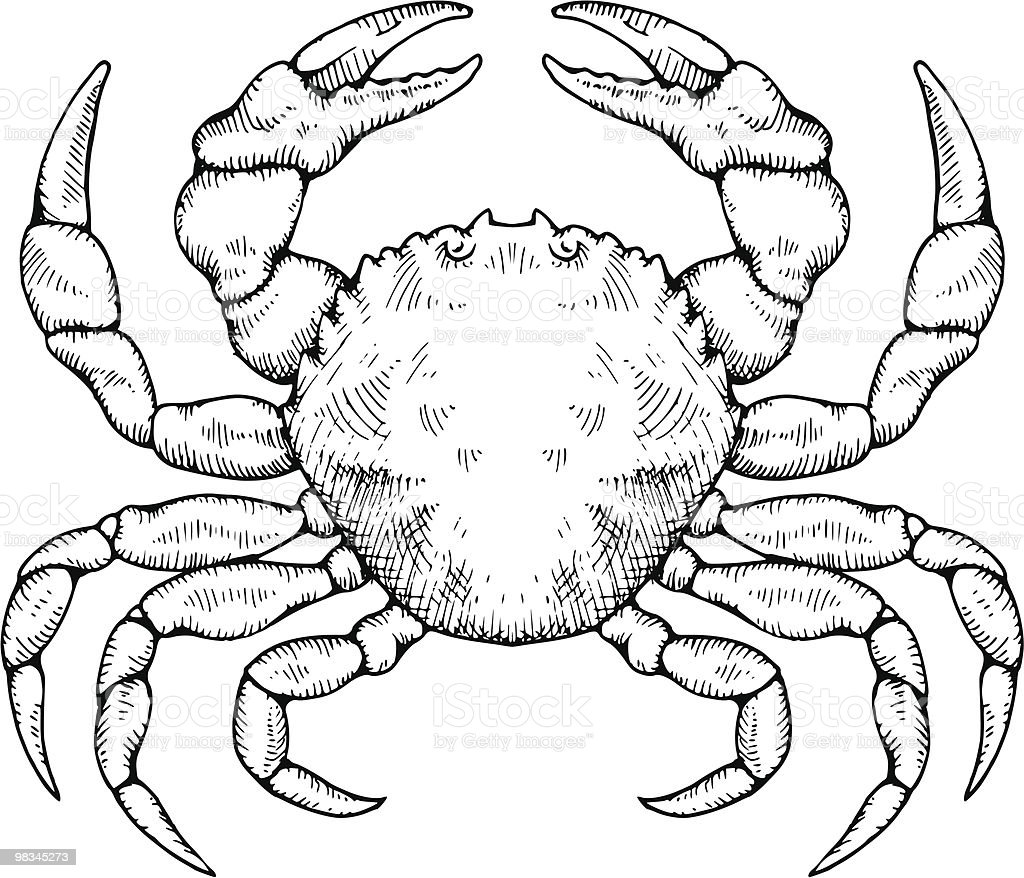 Crab royalty-free crab stock vector art & more images of animal