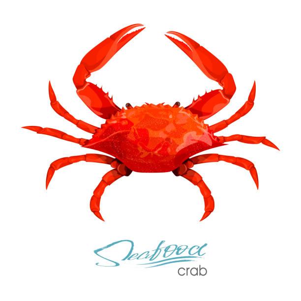 bildbanksillustrationer, clip art samt tecknat material och ikoner med krabba vektorillustration i tecknad stil isolerad på vit bakgrund. fisk-och produktdesign. varelse som flyter i vatten. invånaren djurlivet i undervattensvärlden. ätligt skaldjur. vektorillustration - krabba