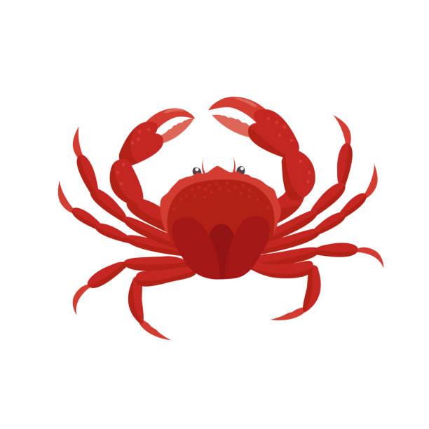 bildbanksillustrationer, clip art samt tecknat material och ikoner med krabba vektor illustration i platt design isolerad på vit bakgrund. - krabba