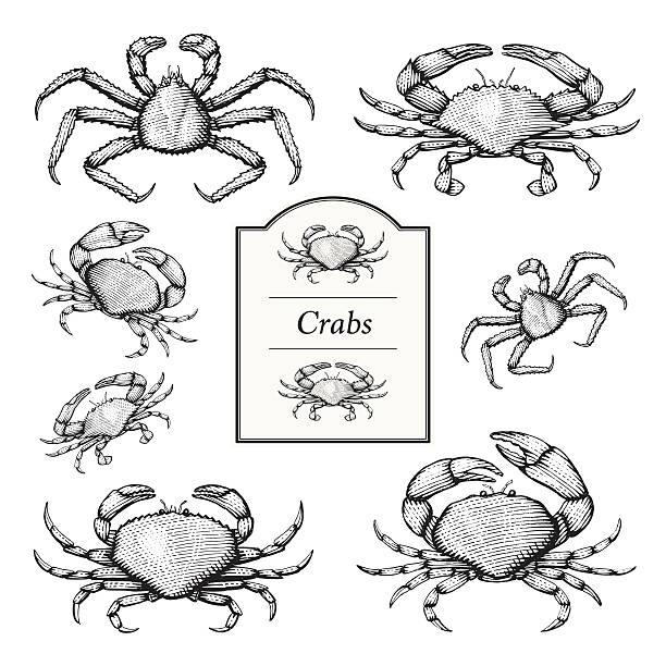 bildbanksillustrationer, clip art samt tecknat material och ikoner med crab vector illustrations - krabba