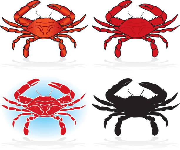 stockillustraties, clipart, cartoons en iconen met crabs, design elements detailed and silhouette - blauwe zwemkrab