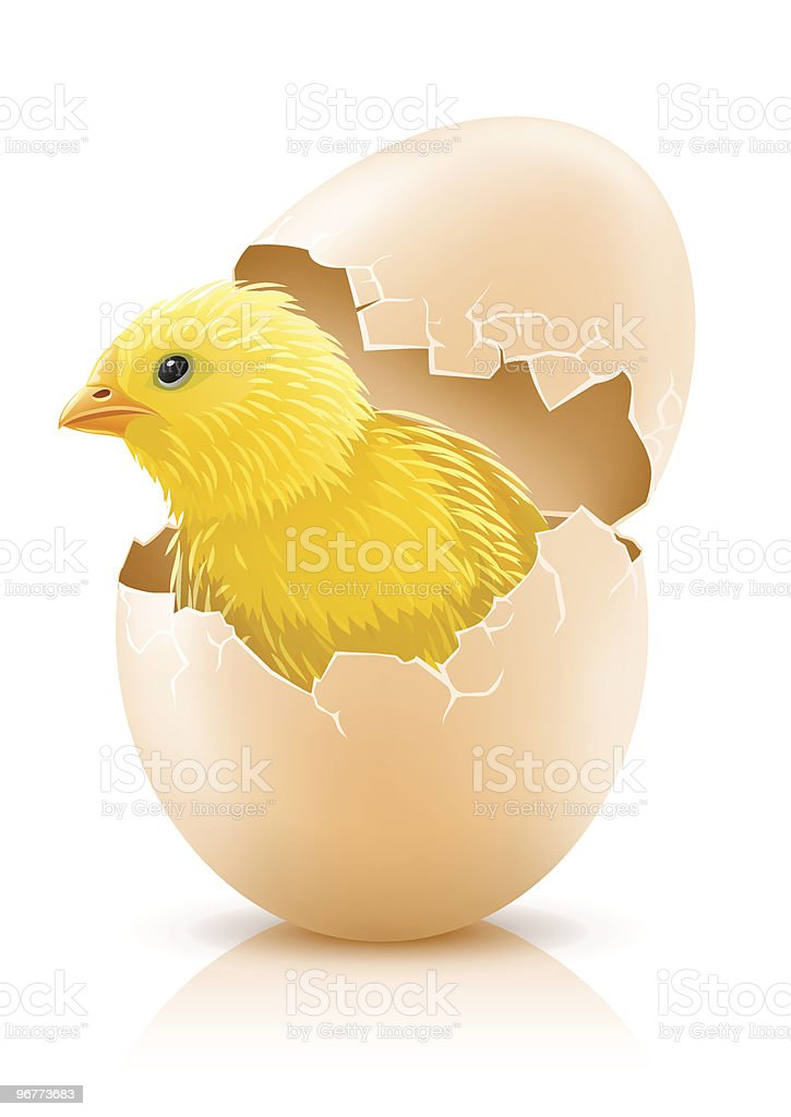 cracked hen's egg with chicken baby inside royalty-free stock vector art