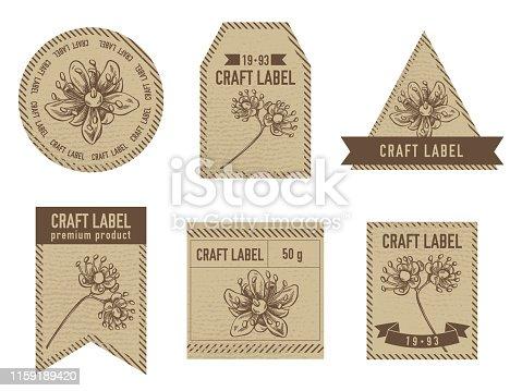 Craft labels with tilia cordata stock illustration