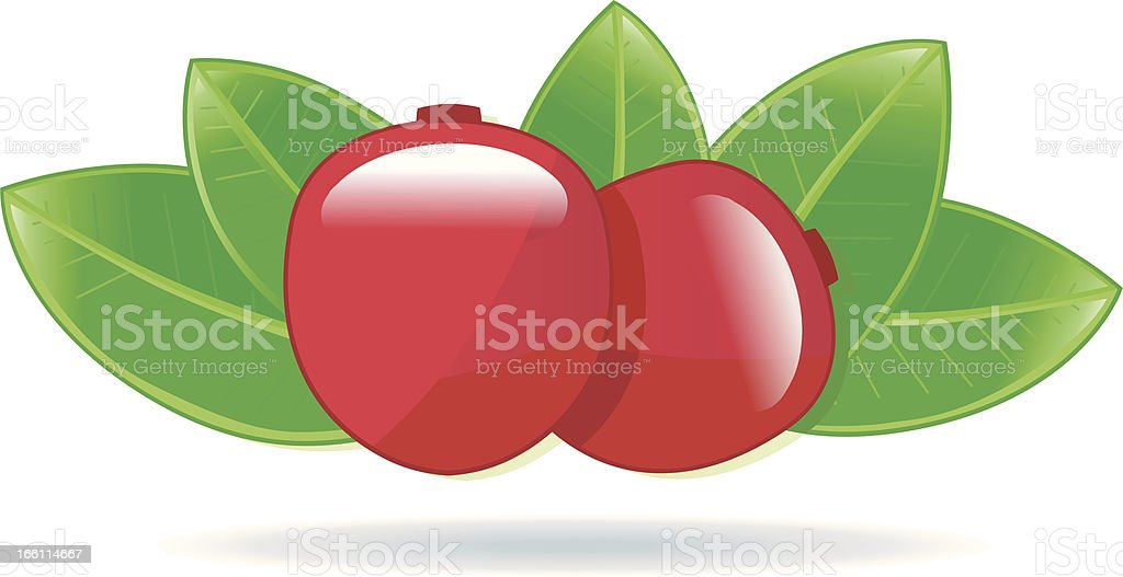 Cranberries with Leafs. royalty-free stock vector art
