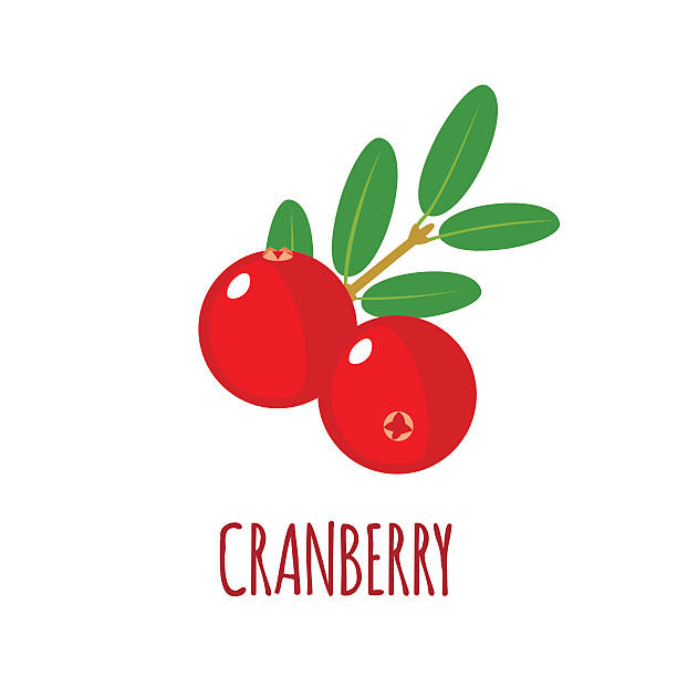 Image result for cranberries  clipart