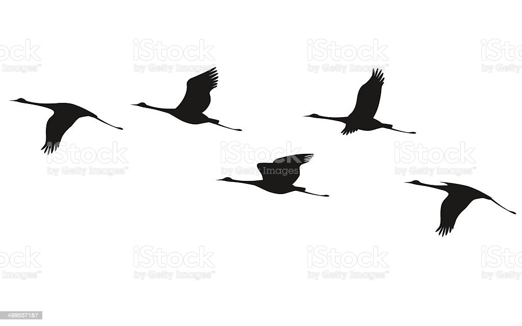 Crane flock vector art illustration