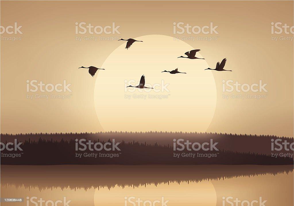 Crane flying at sunset vector art illustration