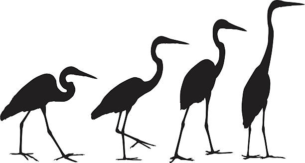 crane silhouettes - crane bird stock illustrations