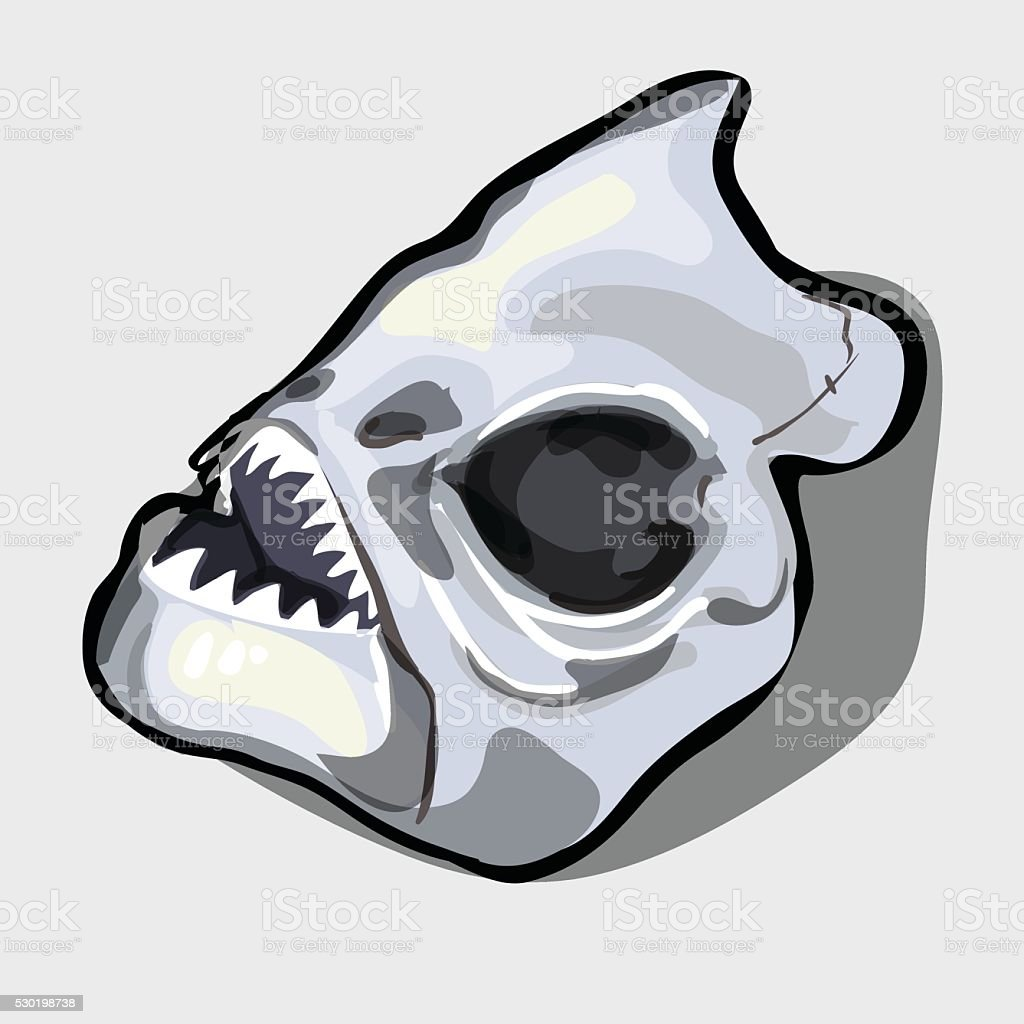 Cranial Bone Fish Head Ancient Toothy Creatures Stock Vector Art ...