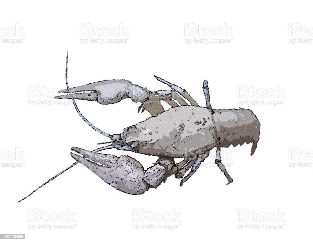 Crawfish. Isolated on  white background. Vector illustration. vector art illustration