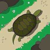 Crawling tortoise