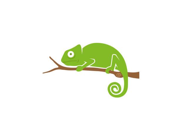 creative chameleon - chameleon stock illustrations