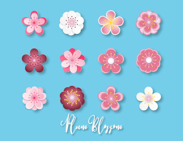 Creative vector illustration collection of plum blossom paper cut style isolated on blue background. Creative vector illustration collection of plum blossom paper cut style isolated on blue background. Paper art digital craft for Shirt design, textile pattern, wallpaper, Travel brochure decorative. plum blossom stock illustrations