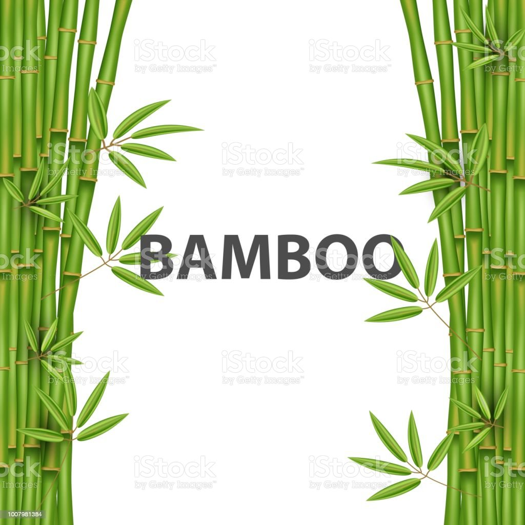 Creative vector illustration of chinese bamboo grass tree. Tropical asian plant art design. Abstract concept graphic banner, brochure, cover, booklet, print, flyer, book, blank, a4 element vector art illustration