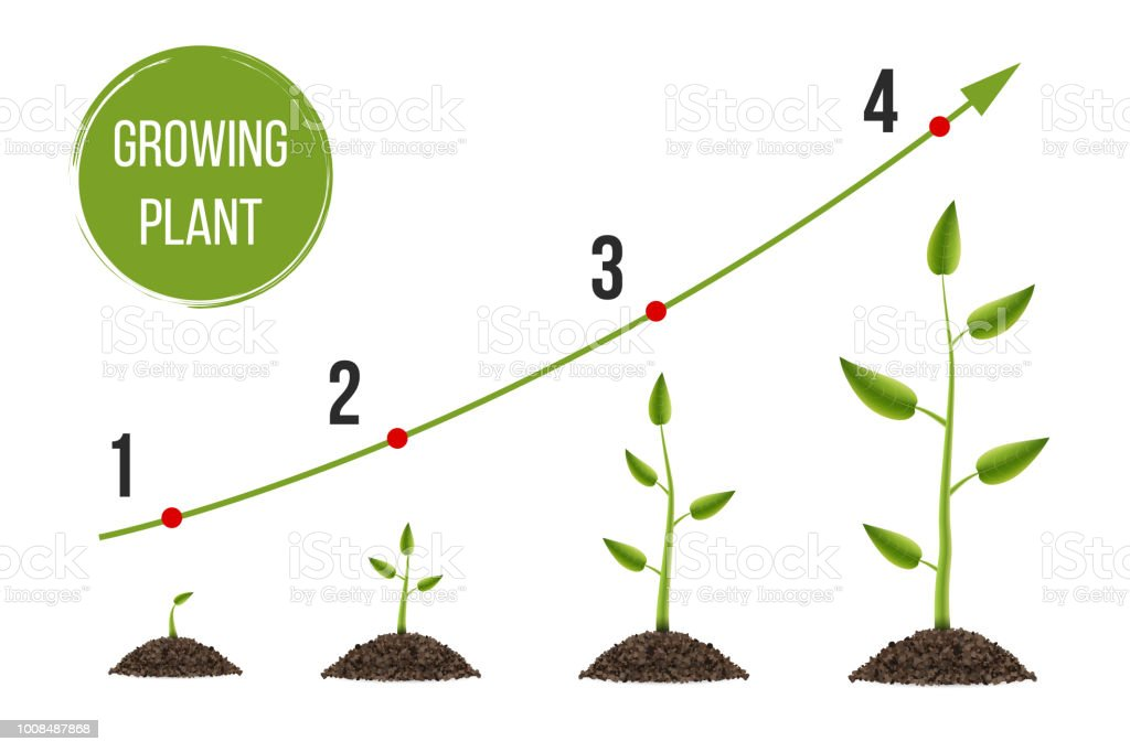 Creative Vector Illustration Of Growth Up Green Tree With