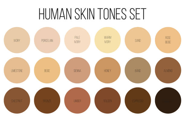 Creative vector illustration of human skin tone color palette set isolated on transparent background. Art design. Abstract concept person face, body complexion graphic element for cosmetics Creative vector illustration of human skin tone color palette set isolated on transparent background. Art design. Abstract concept person face, body complexion graphic element for cosmetics. toned image stock illustrations