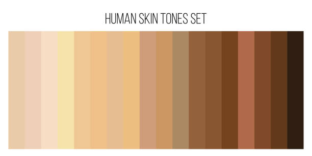 Creative vector illustration of human skin tone color palette set isolated on transparent background. Art design. Abstract concept person face, body complexion graphic element for cosmetics Creative vector illustration of human skin tone color palette set isolated on transparent background. Art design. Abstract concept person face, body complexion graphic element for cosmetics. human skin stock illustrations
